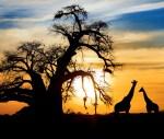 دیدنی های آفریقای جنوبی